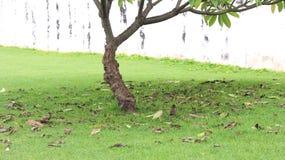 Deux starlings image libre de droits