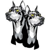Deux têtes de Pinscher de Dobermann dans le style de tatouage Photos stock