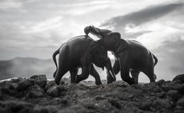 Deux taureaux d'éléphant agissent l'un sur l'autre et communiquent tandis que combat de jeu Photo libre de droits