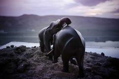 Deux taureaux d'éléphant agissent l'un sur l'autre et communiquent tandis que combat de jeu Images stock