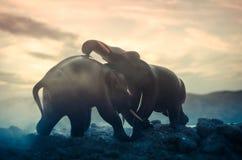 Deux taureaux d'éléphant agissent l'un sur l'autre et communiquent tandis que combat de jeu Photos libres de droits