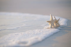 Deux étoiles de mer sur l'océan de mer échouent en Floride, lever de soleil doux doux Images stock