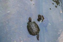 Deux tortues Photos libres de droits