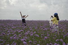 Deux touristes apprécient des fleurs et prennent des photos image libre de droits