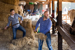 Deux travailleurs de ferme alimentant des chevaux Photos stock