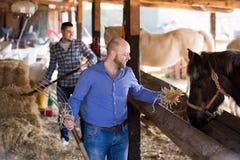 Deux travailleurs de ferme alimentant des chevaux Photographie stock