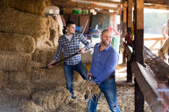 Deux travailleurs de ferme alimentant des chevaux Photo stock