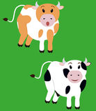 Deux vache mignonne, veau de bande dessinée Photo stock