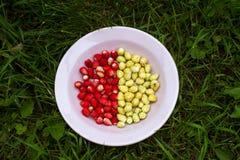 Deux variétés de fraises d'un plat Photographie stock libre de droits