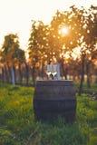 Deux verres de vin blanc sur le vieux baril Image libre de droits