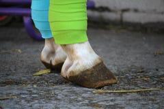 Deux verts et bandages bleus sur des jambes du ` s de cheval Photos libres de droits