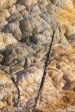Deux vieux arbres debout en parc national de Yellowstone images stock