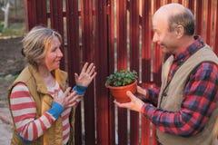 Deux voisins homme et femme regardant sur la nouvelle usine dans le pot photos libres de droits