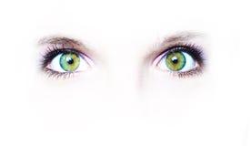 Deux yeux verts Images libres de droits