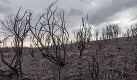 Devastated brände skogen arkivbild