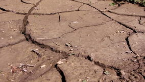 Devastated crops and mud after a flood stock footage