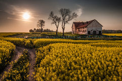 Devastated farm with hives on canola field Royalty Free Stock Image