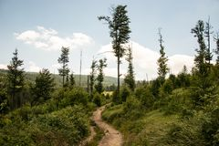 Devastated forest. Wild Nature at Czech Republic. Near Prasily Lake stock photos