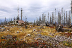 Devastated Landscape from autumn Mountains Sumava Royalty Free Stock Images