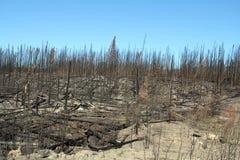 Devastazione del fuoco Immagine Stock