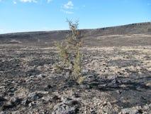 Devastazione selvaggia del fuoco Immagine Stock Libera da Diritti