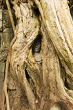 Hidden face, Ta Prohm temple, Angkor Wat, Cambodia Royalty Free Stock Image