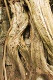 Hidden face, Ta Prohm temple, Angkor Wat, Cambodia Royalty Free Stock Image