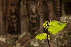 Devatas het snijden in de tempel van Ta Prohm Stock Afbeeldingen