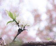 Deve richiedere tempo a fioritura Fotografia Stock
