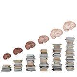 Development of brain Stock Photo