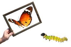 Development and dreams. Butterfly caterpillar and a hand holding a wooden frame with the image of a flying butterfly. Development and dreams. Isolated on a white stock image