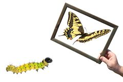 Development and dreams. Butterfly caterpillar and a hand holding a wooden frame with the image of a flying butterfly. Development and dreams. Isolated on a white royalty free stock photo