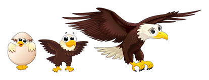 Development of the eagle in different ages. Vector isolated characters Royalty Free Stock Images
