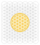 Development of the Flower of Life Stock Photo