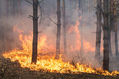 Development of forest fire Stock Image