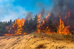 Development of forest fire. Flame is starting damage of trunk. Forest fire and clouds of dark smoke in pine stands. Flame is starting to damage the trunk. Whole stock photo