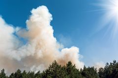 Development of forest fire. Flame is starting damage of trunk. Forest fire and clouds of dark smoke in pine stands. Flame is starting to damage the trunk. Whole stock photos