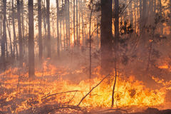 Development of forest fire on sunset background royalty free stock photography