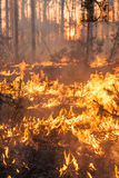Development of forest fire on sunset background stock image