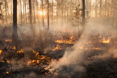 Development of forest fire on sunset background stock images