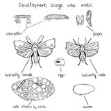 Development stage wax moth. Illustration showing the various stages of the development of the wax moth. From eggs and ending with adult. Vector infographics Royalty Free Stock Photo