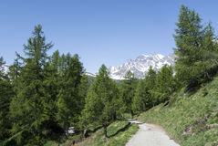 Devero Alp, mountain path through tre forest Royalty Free Stock Photos