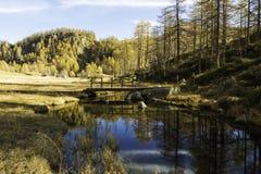 Devero fjälläng, reflexioner i floden i höstsäsong Arkivfoto