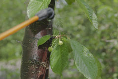 Device for spraying pesticide in the garden. Stock Image