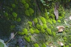 Devido ao ambiente úmido e à água abundante, a entrada da mola mim foto de stock