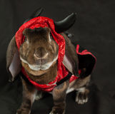 Devil Bunny Stock Photography
