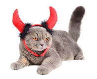Devil cat Stock Image