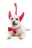 Devil Dog. A white dog lying down with red devil horns, bow tie and tail royalty free stock image