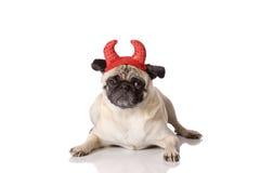 Devil dog. Pug dog dressed in devil costume on white background Royalty Free Stock Photography