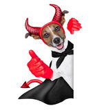 Devil dog Stock Images